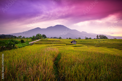 Spoed Fotobehang Pistache indonesia travel destination, amazing sunrise with beauty color of sky at rice fields