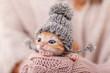 Leinwandbild Motiv Cute ginger kitten with warm woolen hat prepared for winter