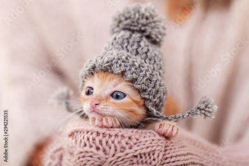 sliczny-imbirowy-kotek-z-cieplym-welnianym