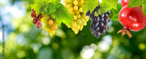 Fotomural  bunches of grapes and pomegranates on a green background close-up