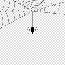 Spider Icon Mock Up Vector Ill...