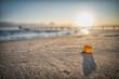 canvas print picture - Bernstein am Strand im Sonnenaufgang