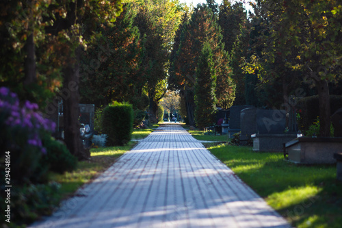 Fototapeta Autumn alley at the cemetery before the All Saints Day obraz