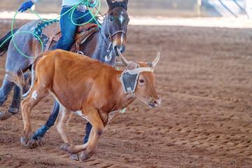 Calf Roping In Australia
