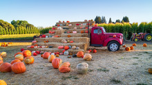 Glorious Country Pumpkins Announce The Autumn Harvest