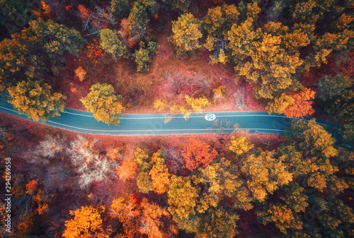 Aerial view of road in beautiful autumn forest at sunset. Colorful landscape with empty road from above, trees with red, yellow and orange leaves. Top view of highway. Autumn colors. Fall woods