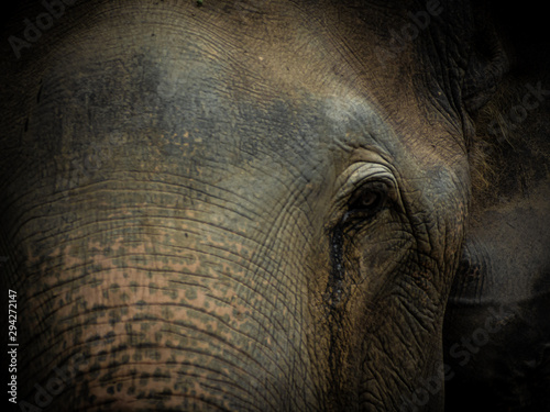 Closeup Old elephant in Thailand sanctuary Canvas Print