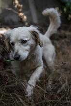 Perro Blanco Corriendo En El Bosque