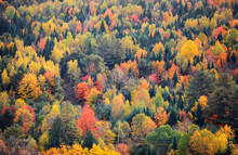 Canopy Of Fall Trees On Appala...