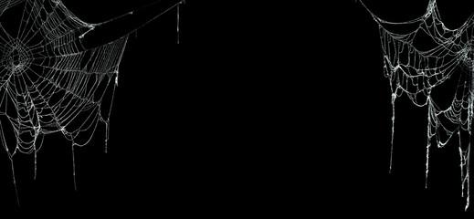 Real creepy spider webs on black banner