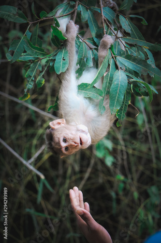 Fényképezés Monkey hanging on the tree, awesome animals in wildlife