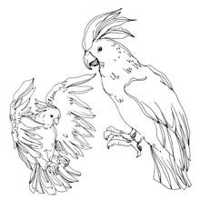 Vector Sky Bird Cockatoo In A ...