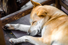 Background Of A Sleeping Dog, ...