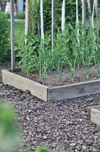 Garden Bed With Plants