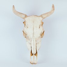 White Cow Skull Isolated On Wh...