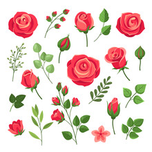 Red Roses. Burgundy Rose Flowe...