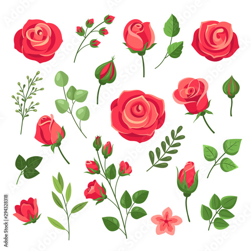 Red roses. Burgundy rose flower bouquets with green leaves and buds. Watercolor floral romantic decor. Isolated cartoon vector set. Pink and red blooming rose, branch floral blossom illustration