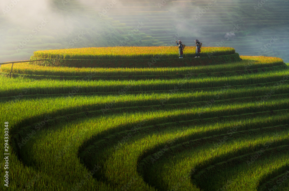 Fototapety, obrazy: Landscape rice fields on terraced of Mu Cang Chai, YenBai, Vietnam