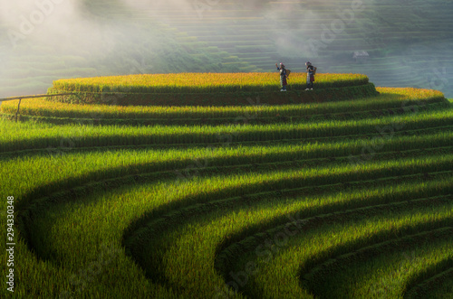 Wall Murals Rice fields Landscape rice fields on terraced of Mu Cang Chai, YenBai, Vietnam