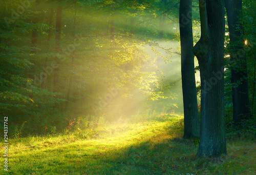 Photo sur Toile Arbre Beautiful morning in the forest