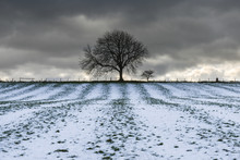 Tree Silhouette At The End Of A Field Dusted With Snow