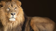 lion king animal background banner