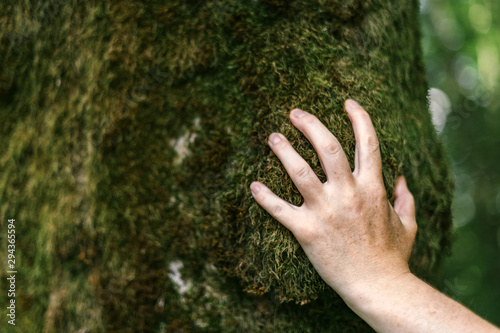 Fototapeta Hand of environmentalist touching tree trunk covered with moss