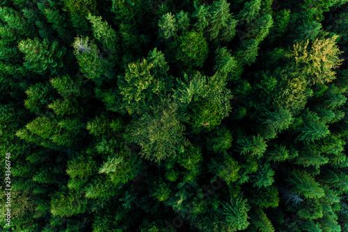 Poster Route dans la forêt Top view of centuries old Carpathian forest trees, beautiful texture.