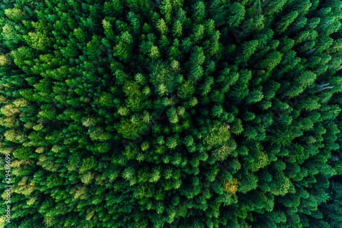 Foto auf Gartenposter Baume Top view of centuries old Carpathian forest trees, beautiful texture.