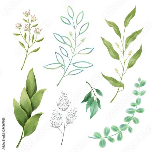 Fototapeta Leaves, herbs, branches watercolor set obraz na płótnie
