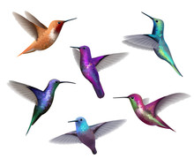 Flying Hummingbirds. Little Co...