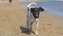 Running Big Dog, Seaside, Beach