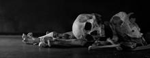 Skulls Animal And Human With P...