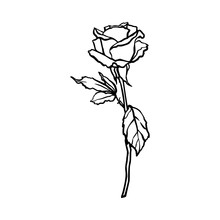 Rosebud Line Drawing. Vector Outline Flower In A Trendy Minimalist Style. For The Design Of Logos, Invitations, Posters, Postcards, Prints On T-Shirts.