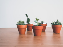 Small Succulents In Terracotta Pots On A Wooden Desk Against A White Background