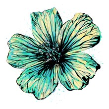 Anthophyta 059c - Hand Painted Cranesbill Geranium Flower Illustration. Turquoise, Cornflower Blue And Pale Yellow Watercolour With Black Ink On A White Background.