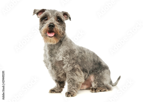 Studio shot of an adorable mixed breed dog Canvas Print