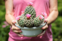 Woman Holding Blooming Cactus ...