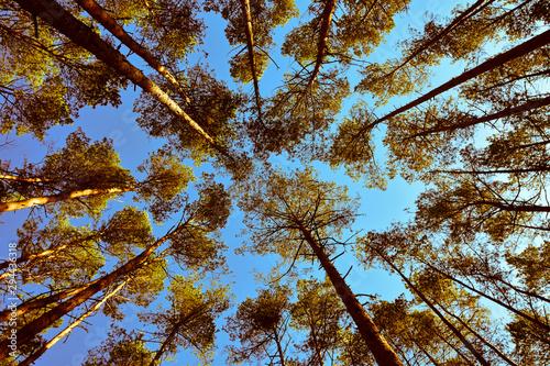 Obraz Jesień i drzewa - fototapety do salonu
