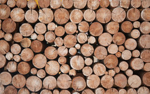 Pile Of Wood Logs Stumps For Winter