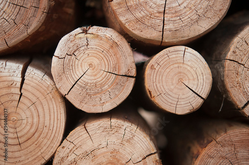 Garden Poster Firewood texture Pile of wood logs stumps for winter
