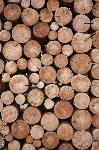 Pile of wood logs stumps for winter - 294444971