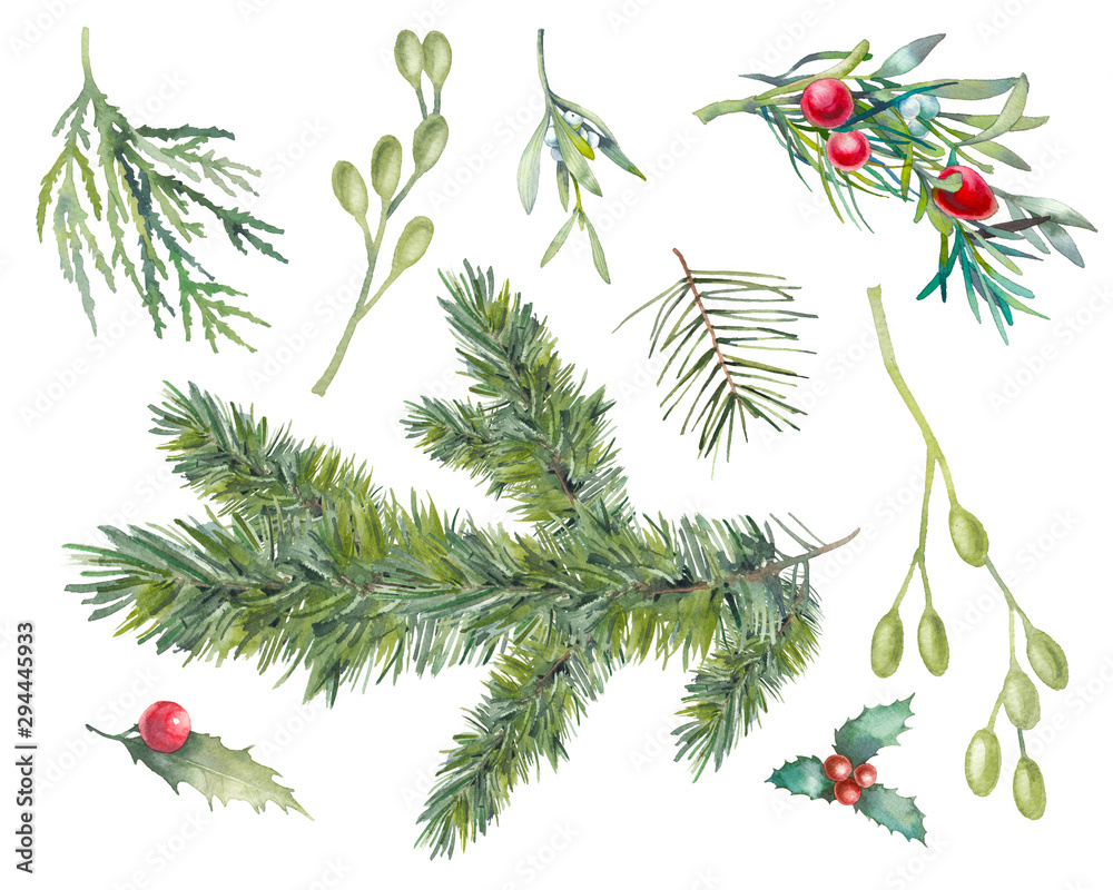 Fototapeta Watercolor Christmas plants set. Hand drawn botanical elements isolated on white background. Branches with berries, spruce, holly, mistletoe for modern natural design