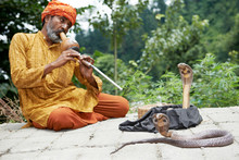 Snake Charmer Man In Turban Playing Music Before Snake In India