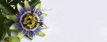 Blue Passion Flower. Floral Background With Copy Space