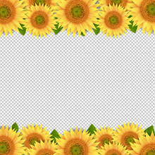 Sunflowers Border Isolated Transparent Background