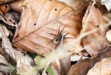 Eine Spinne Auf Dem Herbstlich...