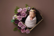 Newborn Girl On A Brown Background With Purple Flowers. Photoshoot For The Newborn. 10 Days From Birth. A Portrait Of A Beautiful, 10 Day Old, Newborn Baby Girl