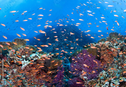 Poster Koraalriffen Colorful coral reef with many fishes and corals.Super wide banner