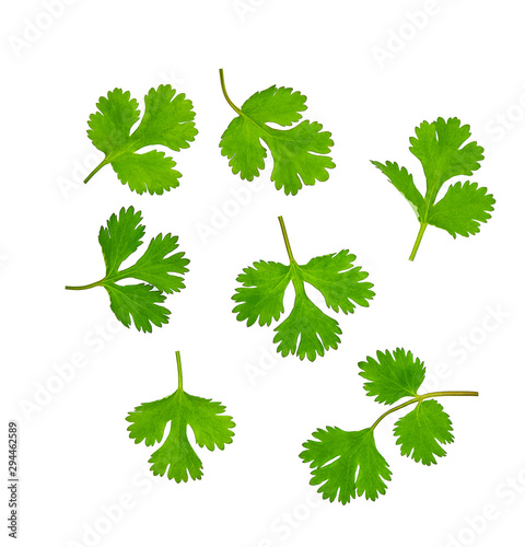 Fotomural  Fresh coriander isolated on white background. Top view.